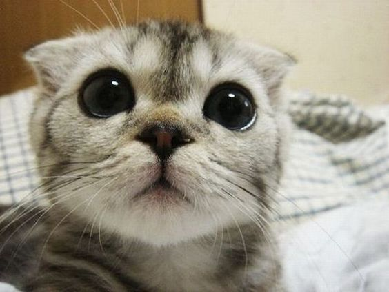 Really cute cat face!